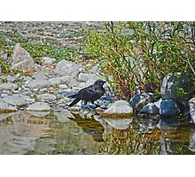 Quenching the Raven Photographic Print
