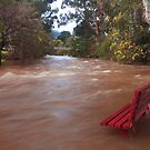 Yarra in flood Warburton  by Donovan Wilson