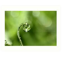 Early Morning Dew Art Print