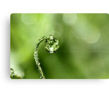 Early Morning Dew Metal Print