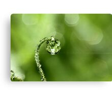 Early Morning Dew Canvas Print