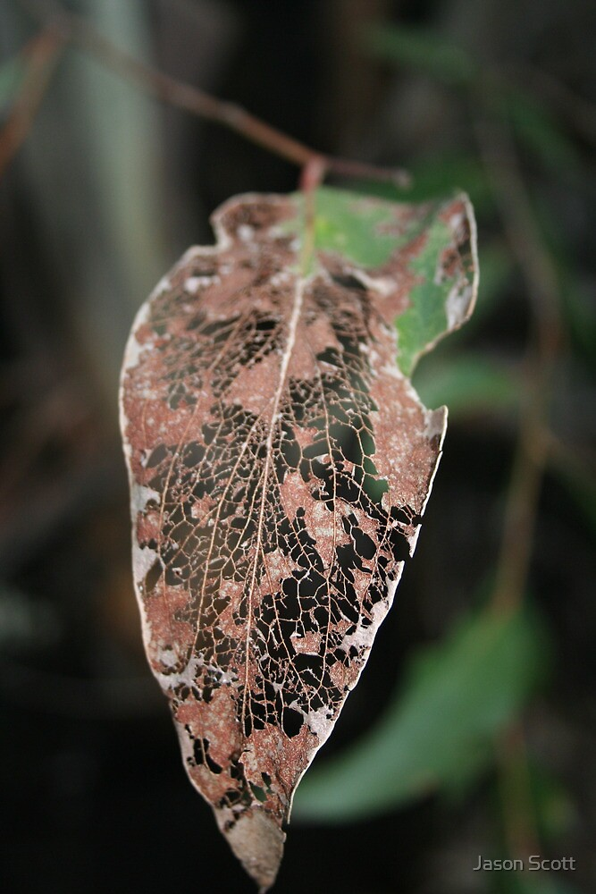 Skeletal Leaf by Jason Scott