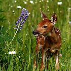 Fawn in Field of Flowers by by M LaCroix