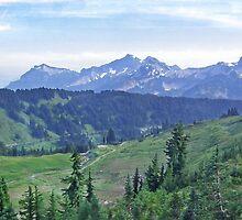 Alpine Meadow by David White
