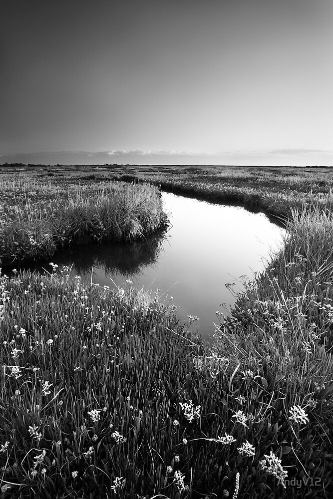 Mirror Mirror on the Marsh BW by Andy Freer