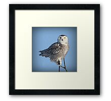 Balancing Talent (with snow) Framed Print