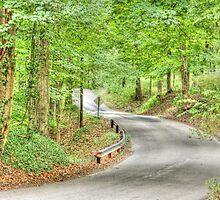 Shaded road near Goethe Link Observatory by David Owens