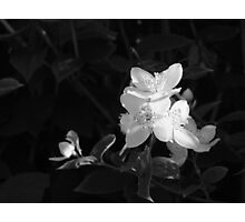 Light from the shade Photographic Print