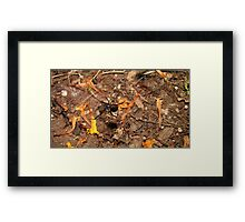 Halloween  black widow spider Framed Print