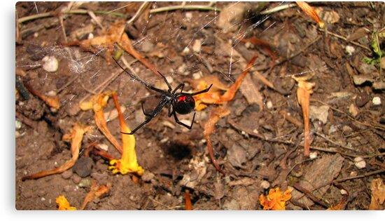 Halloween  black widow spider by nosajnybor