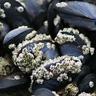 Barnacles on Mussels by Edward A. Lentz