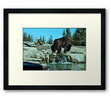 bears.  Framed Print