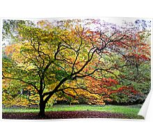 Westonbirt Arboretum, Gloucestershire, UK Poster