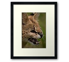 I'm small but tough - Malawi the Serval Framed Print