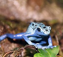 Poisonous Blue Beauty by robrich