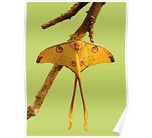 Comet Moth Poster