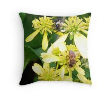 Why can't we BEE friends? Throw Pillow