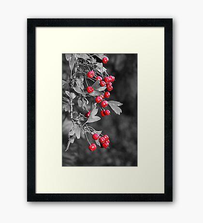 Berry Power Framed Print