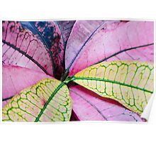 Colorful Abstract Botantical Leaves Poster