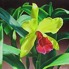 Cattleya orchid - yellow, red and green by lanadi