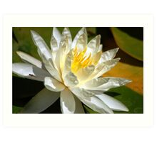 Lily in Water Art Print