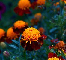 The Floral Finale by Joe Sheldon