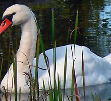 Beautiful Day Beautiful Swan by Monica Engeler