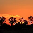 Quiver Tree Forest at Sunset by Jennifer Sumpton
