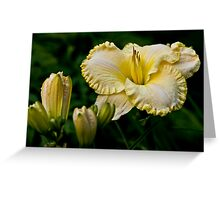 """Daylily """"First Knight"""" Greeting Card"""