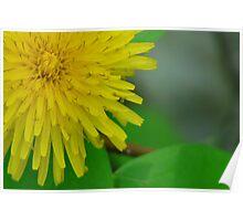 Pretty in Yellow,Dandilion Poster