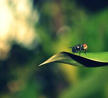 Fly on leaf by JasminsPhotos