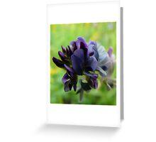 Purple Alfalfa Blossom Greeting Card
