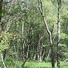 Deep in the Woods by teresa731