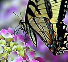 Butterfly on Hydrangea Sticker