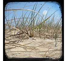 Grassy Dunes - TTV #2 Photographic Print