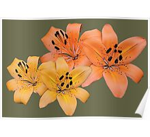 Gorgeous yellow and orange tiger lily flower photo art. Poster