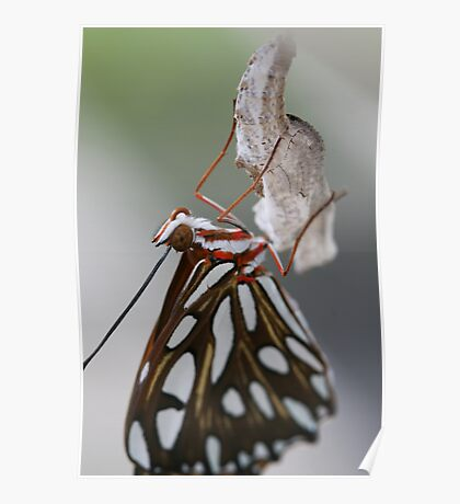 New Life Butterfly Poster