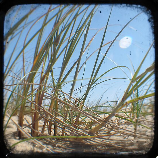 Grassy Dunes - TTV #3 by Kitsmumma
