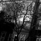 winter street. brooklyn, nyc by tim buckley | bodhiimages