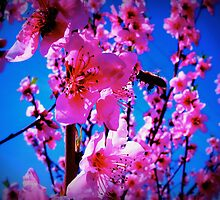 bees<3flowers by yeahitsanton