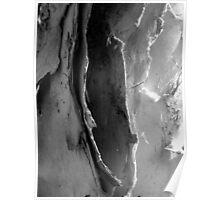 Paper Bark Gum  Poster