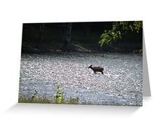 what a day to cool off.... Greeting Card
