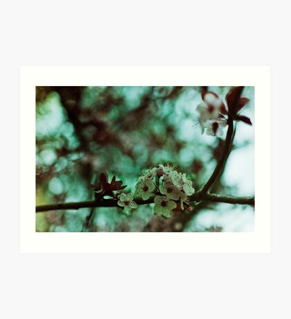early spring cherry blossoms Art Print