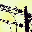 powerlineflyers. by yeahitsanton
