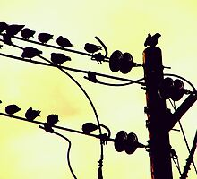 powerlineflyers. by Lance Anthony A.