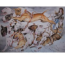 BULLIE CART Watercolour of Bull Terriers Pulling a Cart! Photographic Print