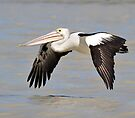 Australian Pelican taken at Longreach Waterhole near Elliott NT. by Alwyn Simple