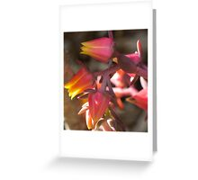 Pretty suculents Greeting Card
