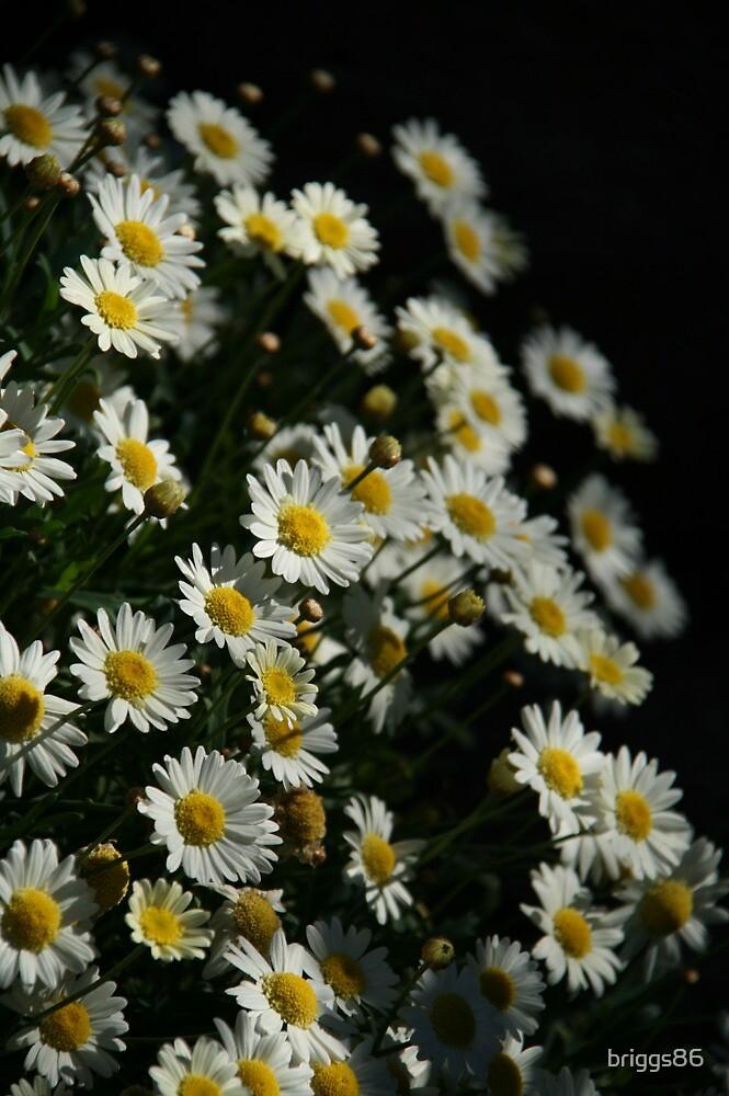 Flowers Ho! by briggs86