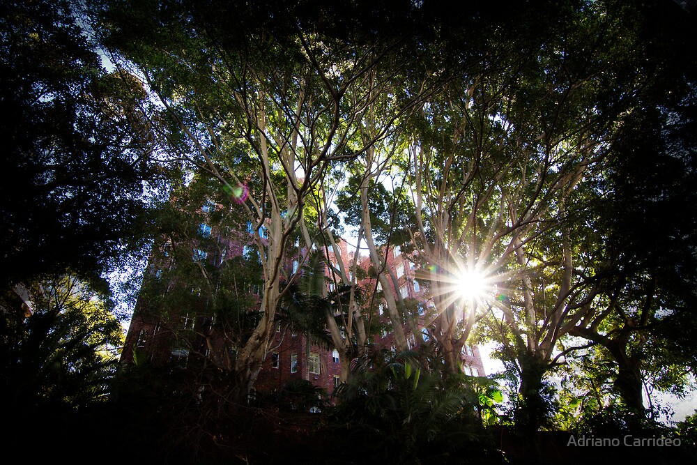 Light through the trees by Adriano Carrideo